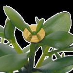 kanenonaruki